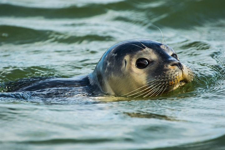 Lizzie Daly: Saving Scotland's Seals